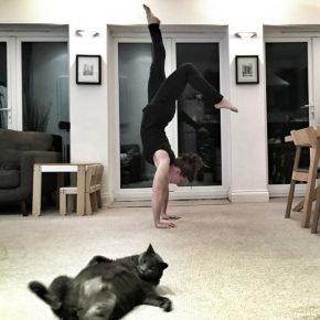 кот валяется на полу