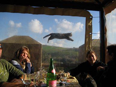 кот летит в воздухе
