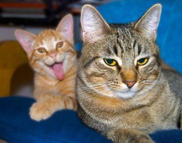кот портит кадр другому коту