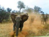 Слон атаковал автомобиль с туристами