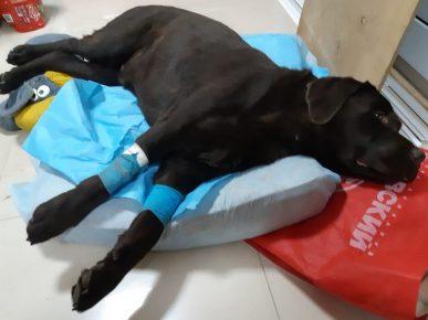 Барри после сложной операции на позвоночнике