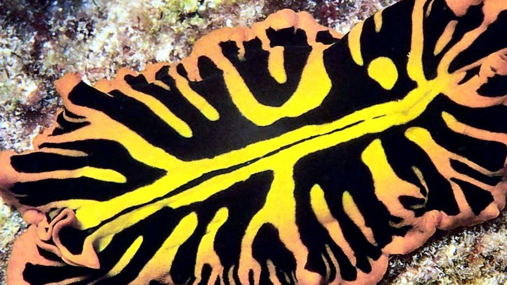 Желтый плоский червь