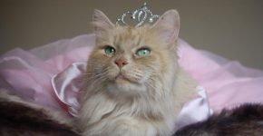 кот в короне