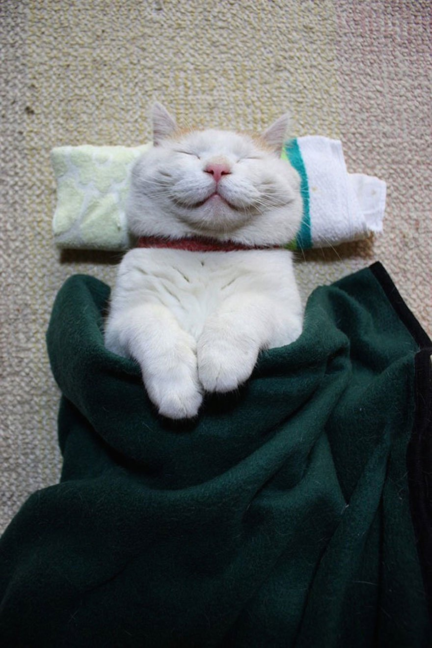 Широнеко в спит в постели