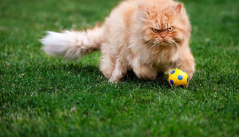 Гарфи играет в футбол