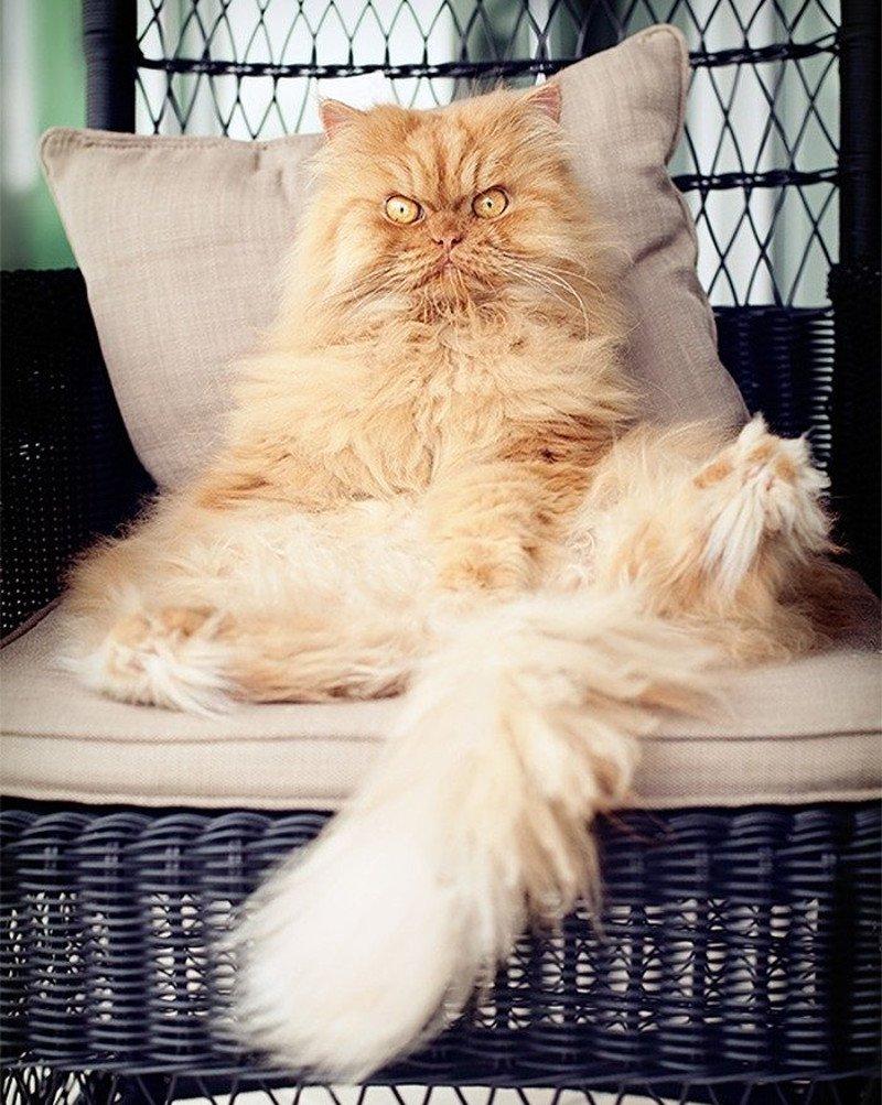Кот восседает на мягком троне