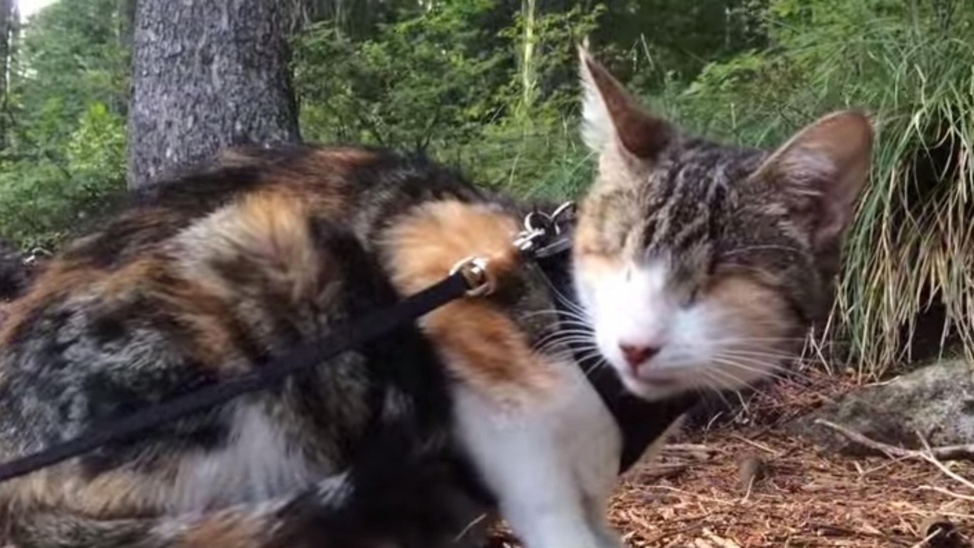 Слепая кошка ходит в походы