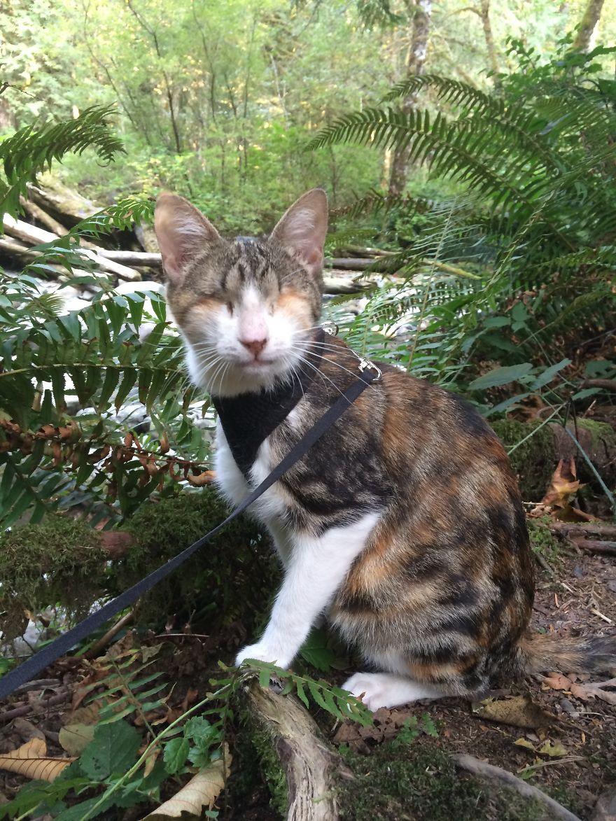 Ханни Би в лесу