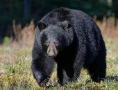 Медведь из Флориды напал на собаку