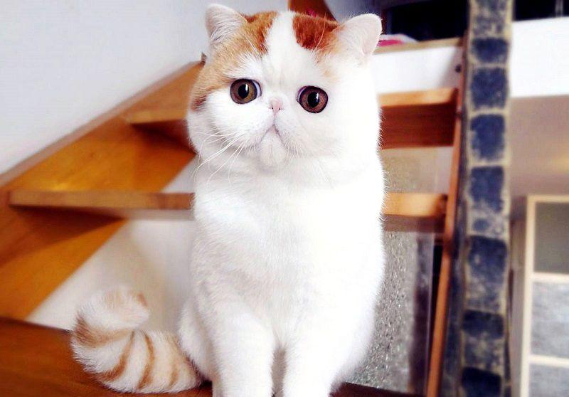 Очаровательный кот Снупи