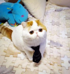 Японский кот Снупи звезда интернета