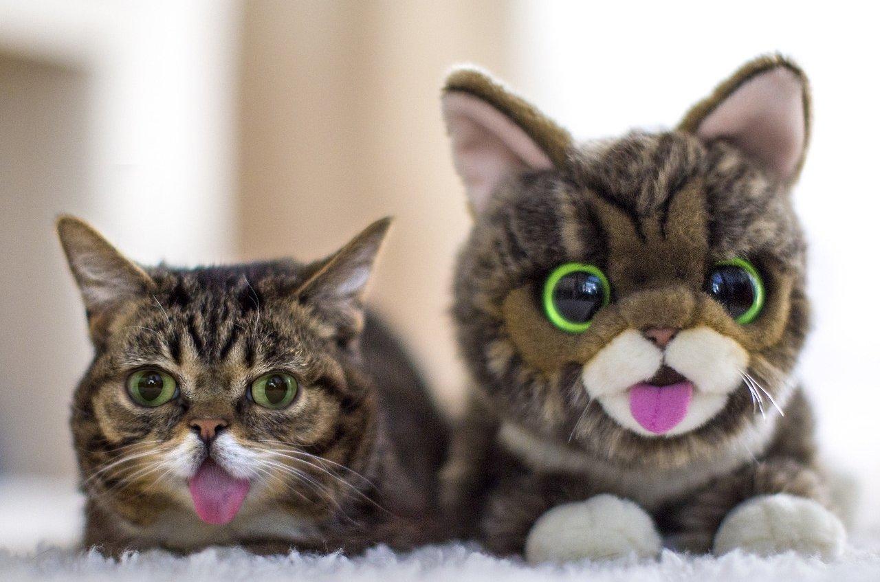 Кошка с мягкой игрушкой похожей на неё