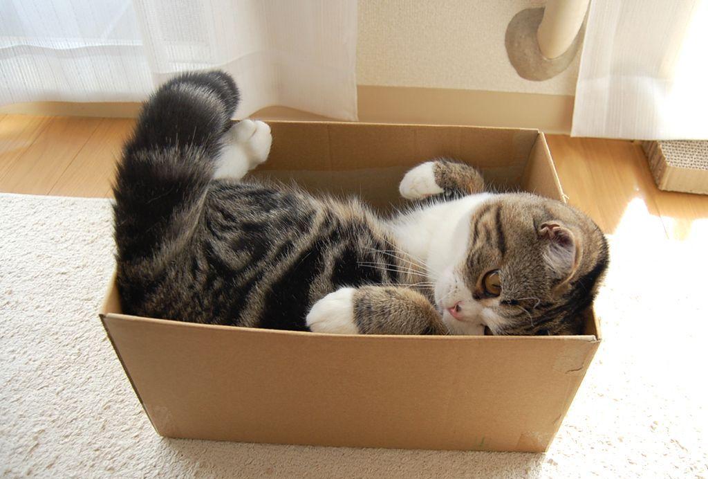 Мару (Maru), Повелитель коробок