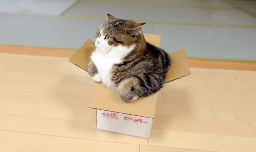 Вот эта коробочка почти впору