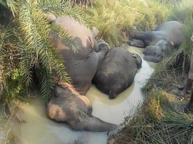 Семь слонов погибли в индийском штате Орисса
