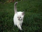 Девушка погасила долги приюта ради спасения котёнка