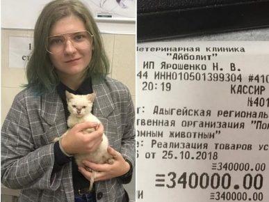 В Майкопе студентка оплатила долги волонтёров, чтобы спасти котёнка