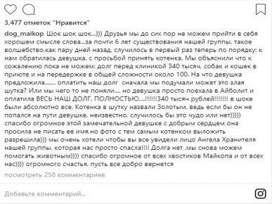 """Пост благодарности в Инстаграм """"Бездомные животные Майкопа"""""""