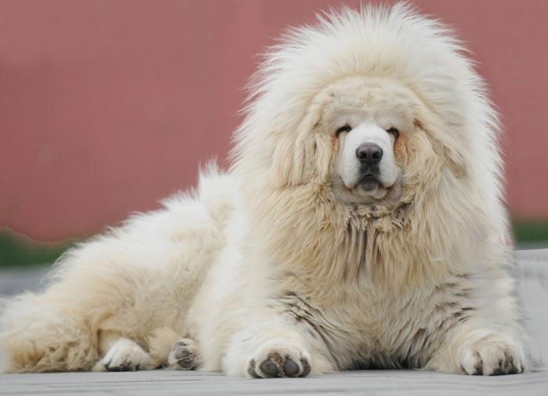 Самая дорогая собака