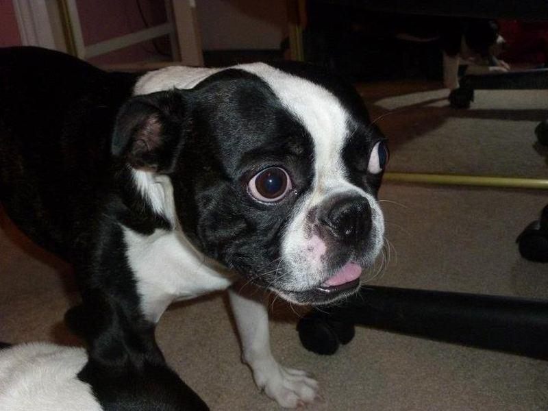 Бруски — обладатель самых больших глаз