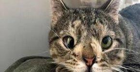 Кошка с синдромом Дауна обрела новую семью