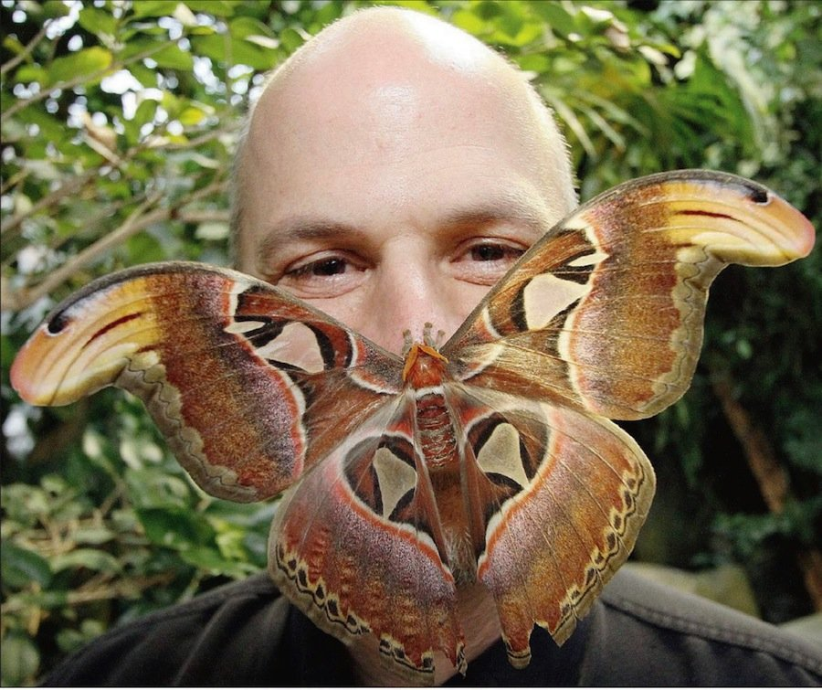 Самая крупная бабочка