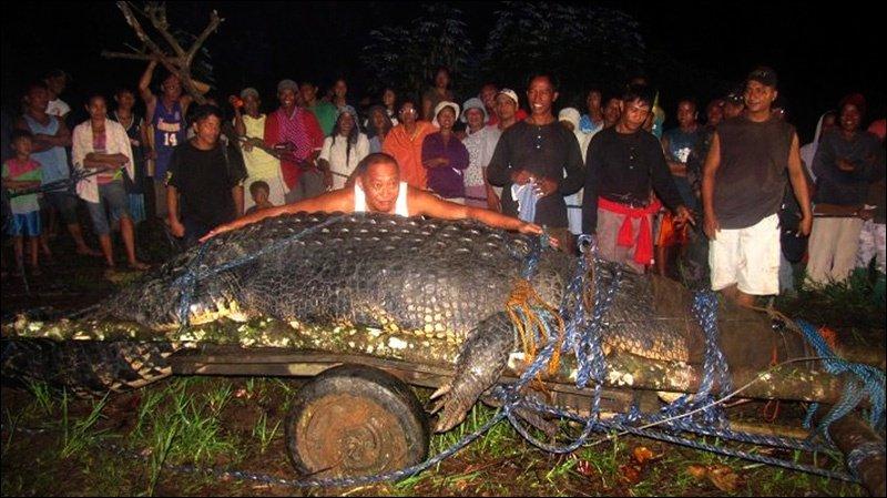 Самый большой крокодил