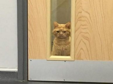«Сердитый кот» Саул ждёт новых хозяев