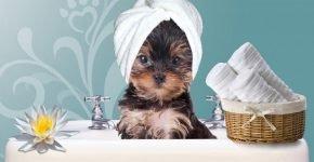 купать собаку