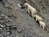 Медведи вышли к людям в Чукотском селе