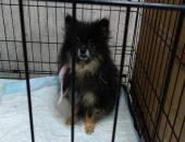 Волонтёры спасли арестованных собак у должницы перед банком