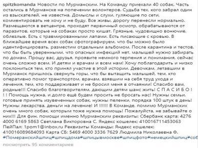 Пост в сообществе «Шпиц-команда» о спасённых шпицах