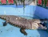 Посетителям зоопарка в Китае не понравился медленный крокодил