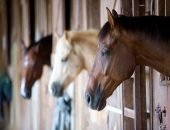 Породистые лошади сгорели в пожаре на частной конюшне
