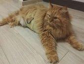 Воры вернули похищенную кошку целую и невредимую