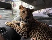Неожиданный пассажир
