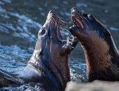 Тюлени атаковали местного рыбака