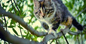 Котёнок стал причиной травмы мужчины в Москве