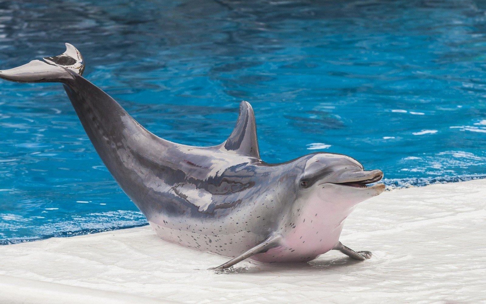 Дельфин в аквапарке
