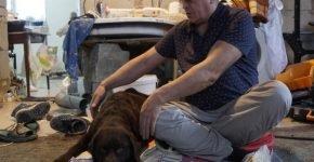 Пёс Барри восстанавливается после операции