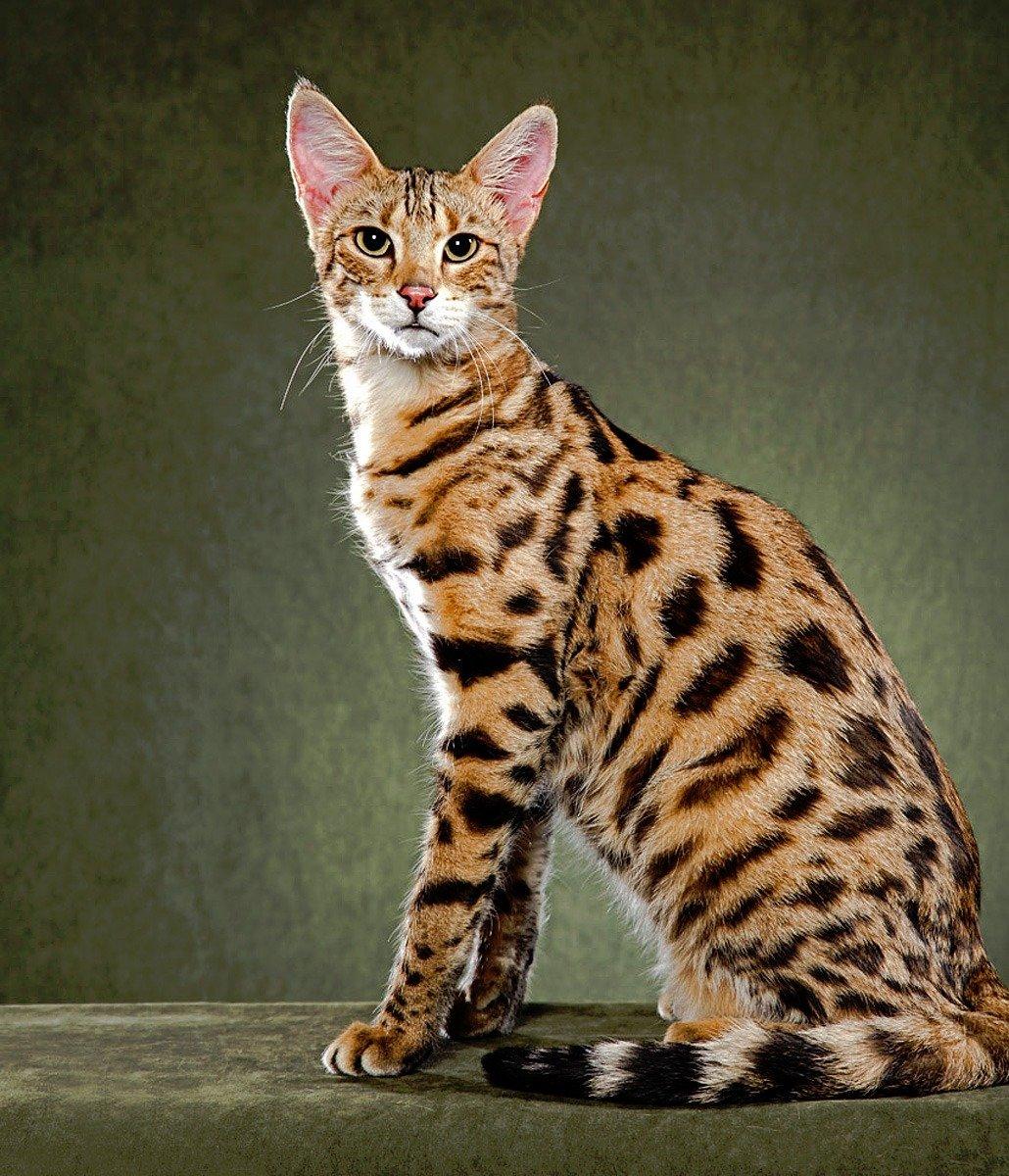 Парода кошек в картинках