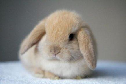 Кролик — домашнее животное для ребенка