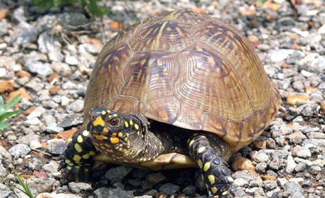 Черепаха как домашнее животное для ребенка