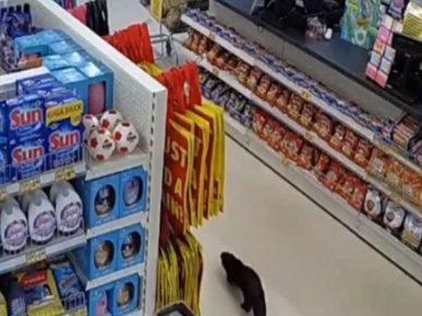 Выдра в магазине