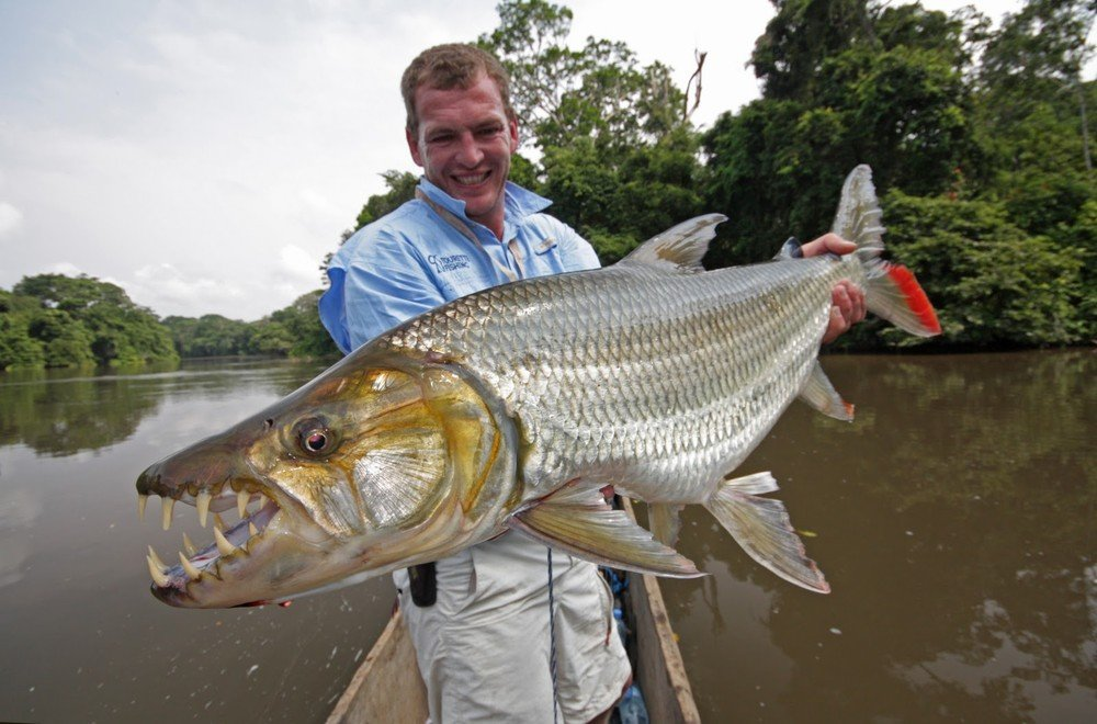 Тигровая рыба в руках рыболова