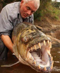 Тигровая рыба вблизи