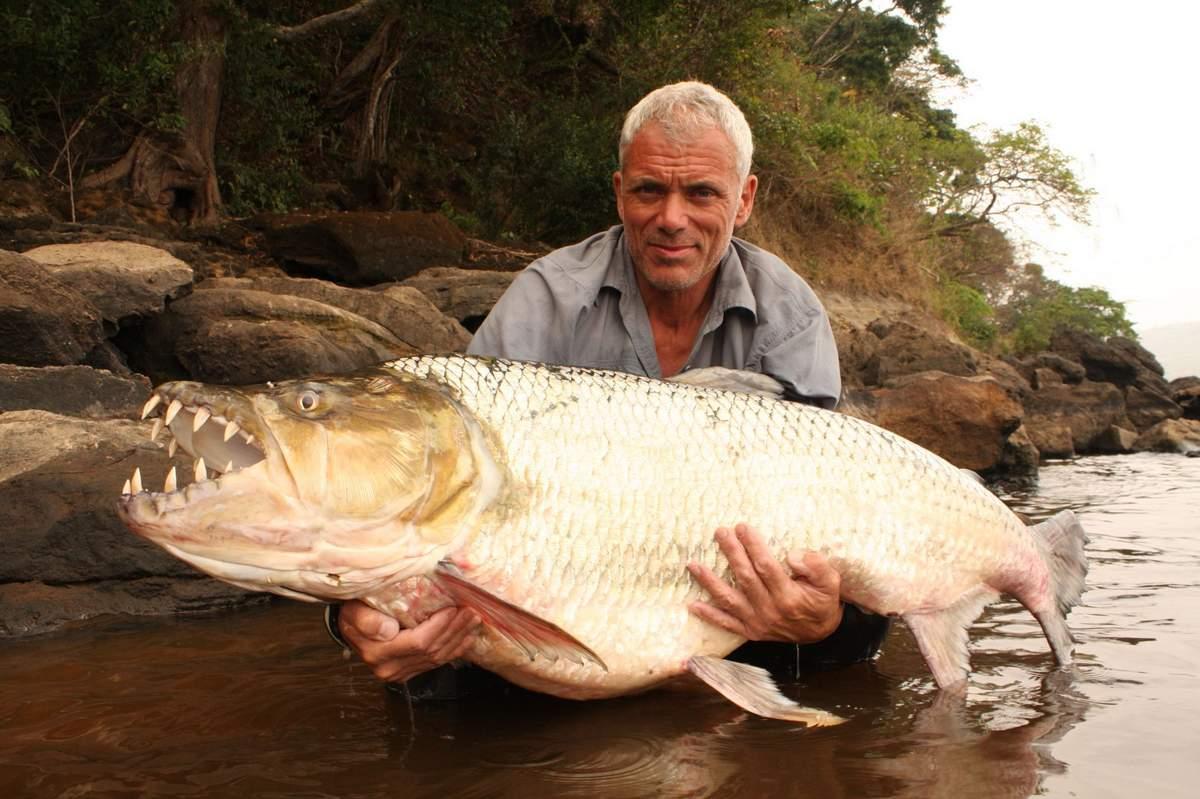 Большая тигровая рыба — старший брат пираньи