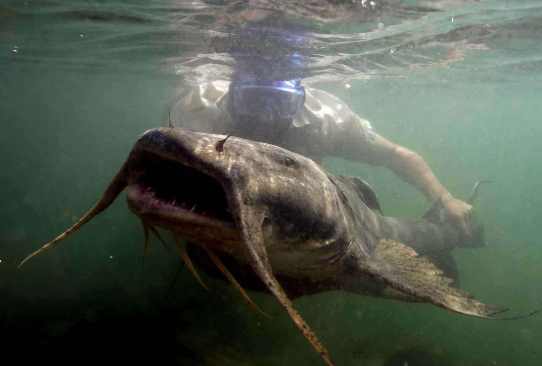 Гунч под водой