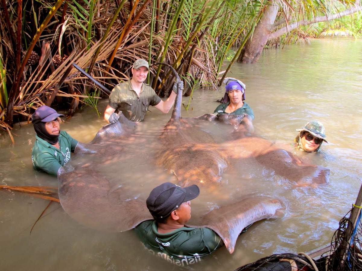 Рыбаки поймали ската