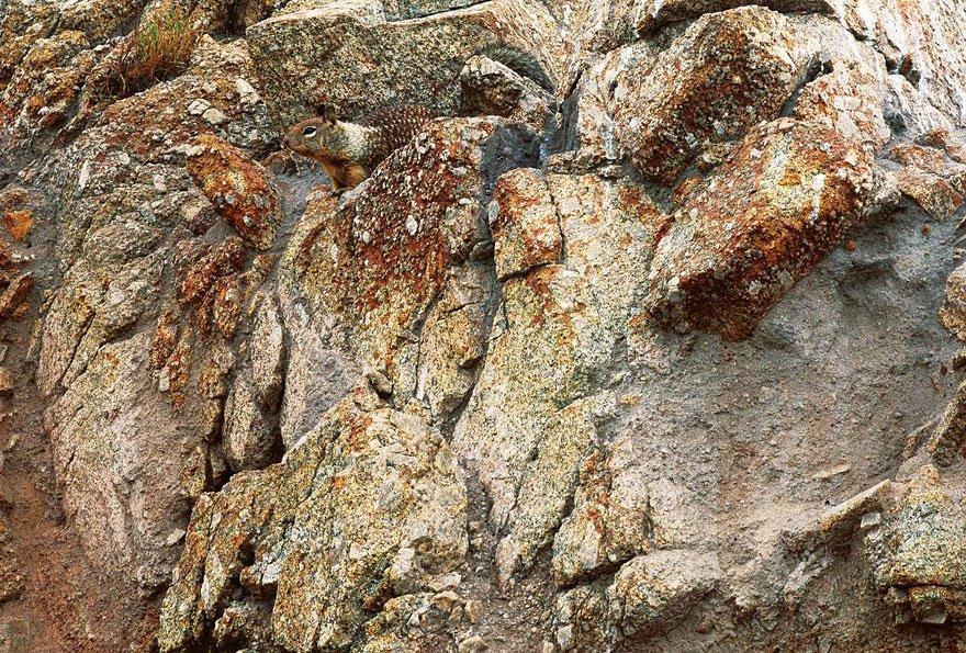 Белка или грызун прячется в камнях